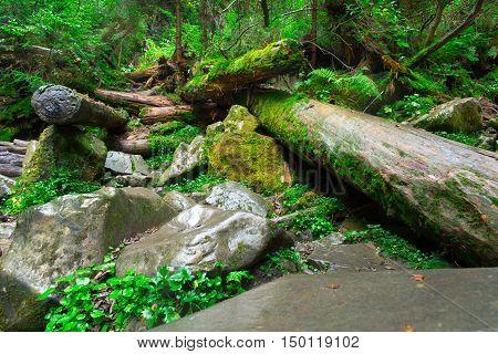 Beautiful landscape of dense woodland. Dense forest background