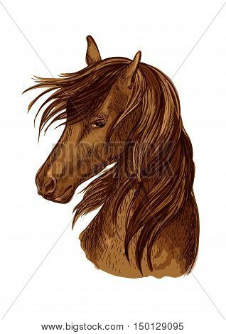 Horse head sketch. Brown racehorse mare of arabian breed for horse racing badge, riding club symbol, t-shirt print design