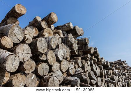 Big pile of logs on a blue sky background