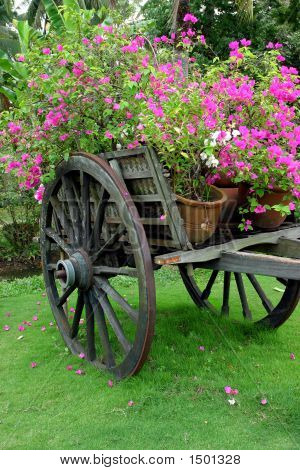 Flower Cart In The Green Garden