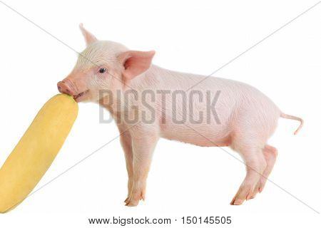 pink pig on a white background. studio