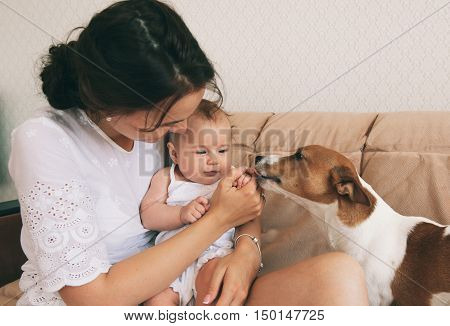 Young mother with her cute baby playing with jack russel terrier dog.
