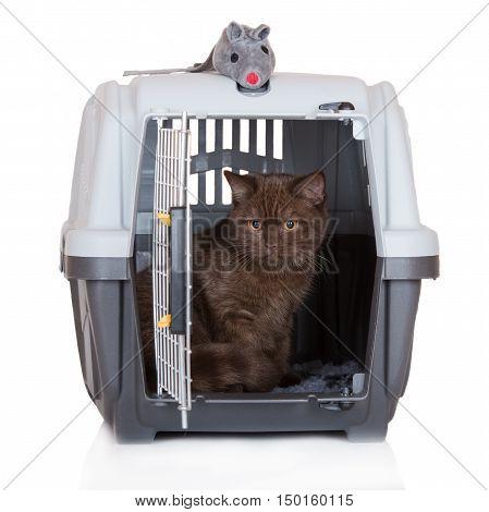 british shorthair kitten sitting in a pet crate
