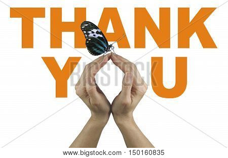 A gentle thank you - female hands making the O of You in THANK YOU,  in orange on a white background, with a closed resting butterfly delicately balanced on fingertips