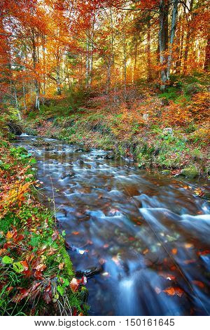 rapid mountain river in autumn. Colorfull wood background. Sunset time