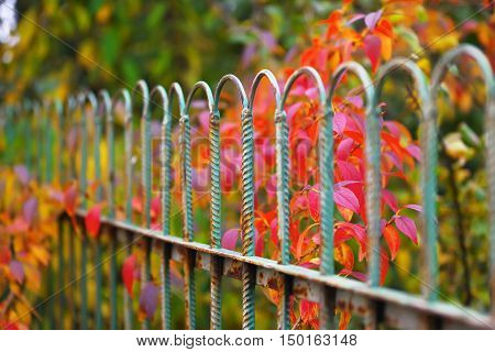 Detail of garden fence with colorful vegetation in Autumn season.