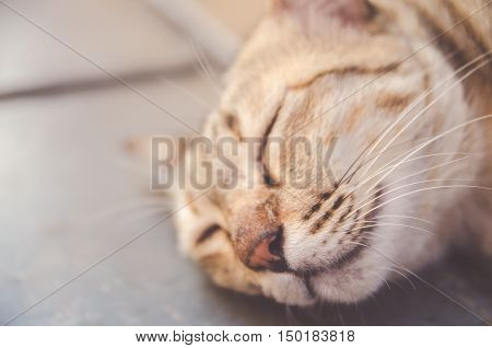 cute kitty cat sleeping on floor soft focus selective focus