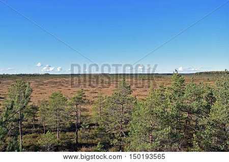 Beautiful view over the bog Vajosuo in Kurjenrahka National Park, Finland.