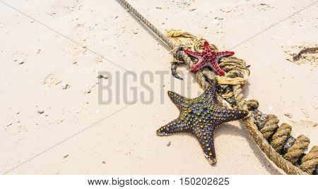 starfish with knot on a coastline near clear water on clean sand
