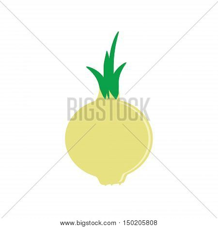 Vector illustration white yellow onion vegetable. Fresh and healthy food. Onion flat icon