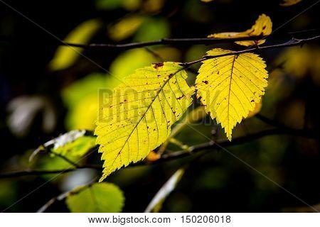 Nice abstract autumn tree twig