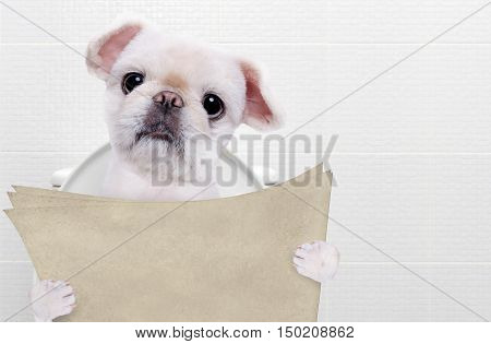 Dog with a newspaper in a toilet.