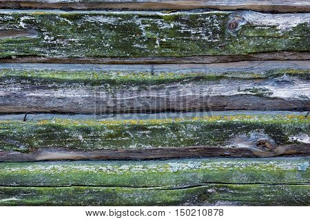 Part of old wooden wall covered with lichen. Background. Texture