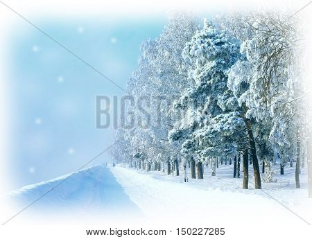 Winter card with snowy winter road trees. Frosty cold day.