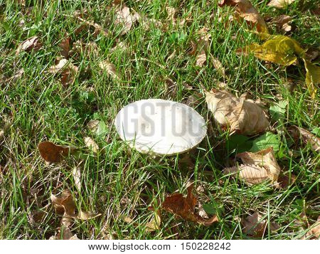 a mushroom or toad stool spring up in a grassy meadow.