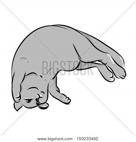 Grey cat lying on his back lazy fat kitten on a white background. Vector illustration