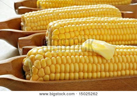 Freshly steamed corn on the cob served in wooden dishes.  Back lit with natural sunlight.  Macro with shallow dof.