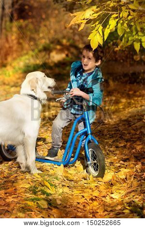 Little boy biking with a golden retriever in autumn park