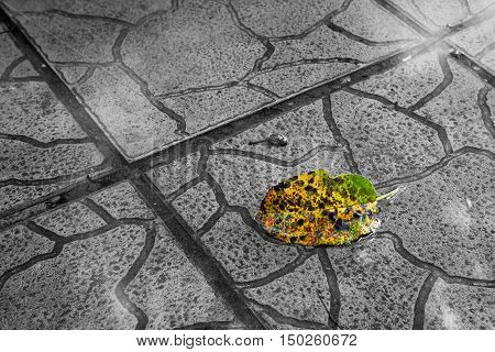 Yellow leaf floating in a water puddle