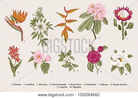 Exotic flowers set. Botanical vector vintage illustration. Design elements. Colorful.
