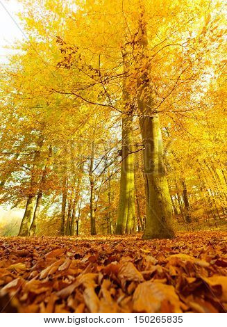 Autumnal Scenery In Forest.