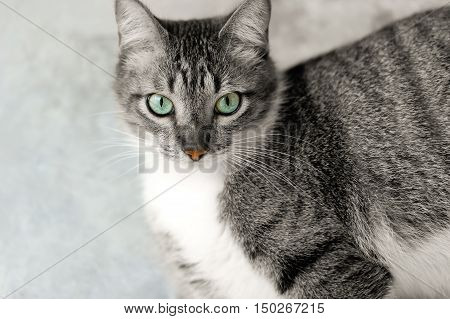 Cat eyes is a beautiful Tabby cat with a healthy orange nose and beautiful deep green eyes.
