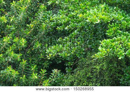 Top of Trees in Rio de Janeiro Brasil