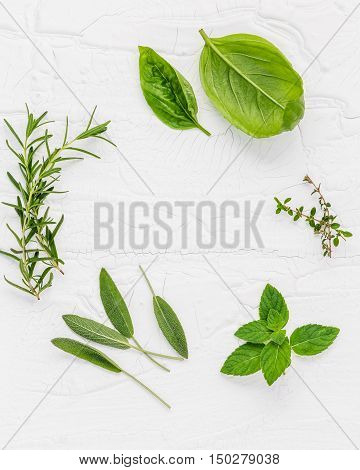 Various Fresh Herbs From The Garden Peppermint , Sweet Basil ,rosemary,oregano, Sage And Lemon Thyme