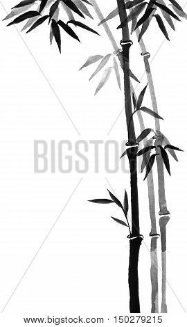 Bamboo trees hand-drawn with ink in traditional Japanese painting style sumi-e.