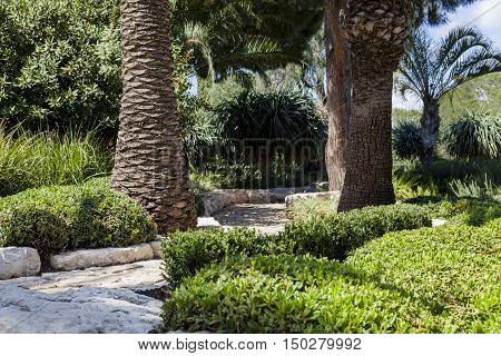 Stone paved passage between two palms in the park