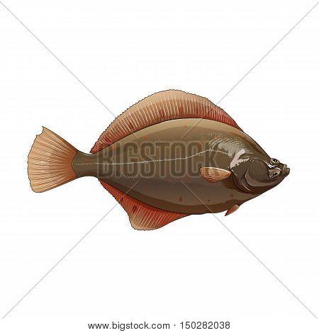 Flounder, isolated raster illustration on white background