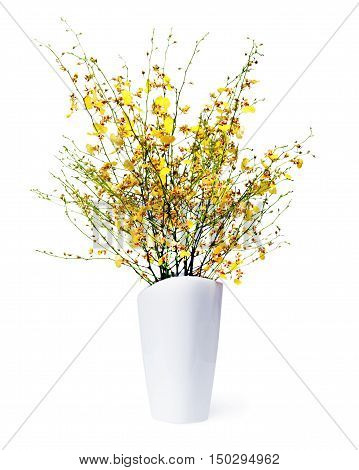 Very rare kind of miniature orchids arrangement centerpiece in vase isolated on white background.
