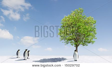 A tree growing in Antarctica
