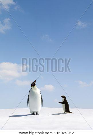 Kaiserpinguin lehnt Adelie Pinguin