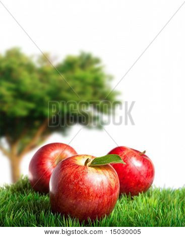 Royal gala Apples on Grass with an Apple Tree in the background