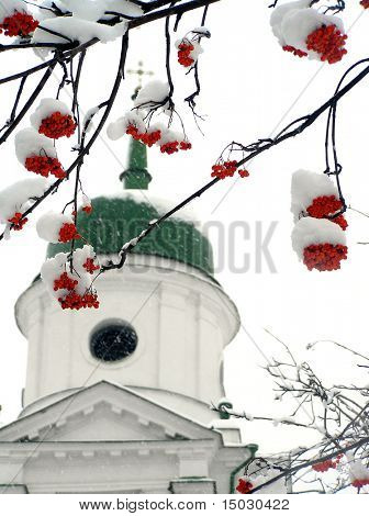 Brunches of ashberry in snow against the church
