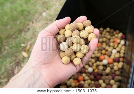 Boilies are bait for carp fishing in lakes