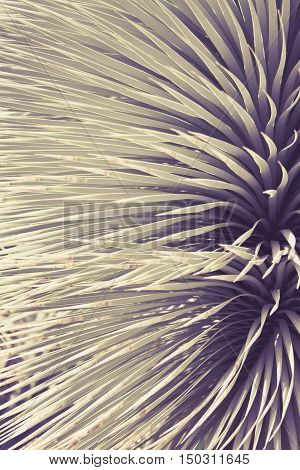 Spiked Agave plant close up art background