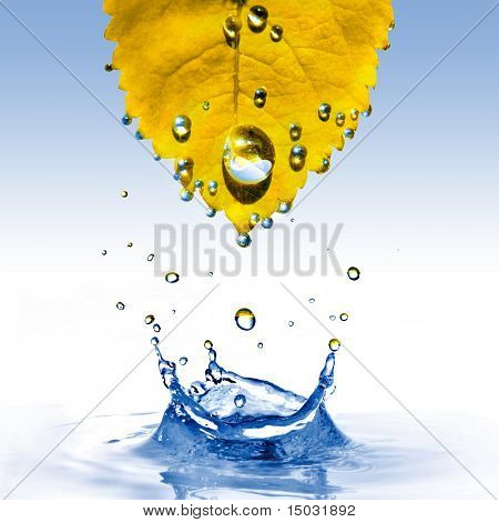 yellow leaf with water drops and splash isolated on white