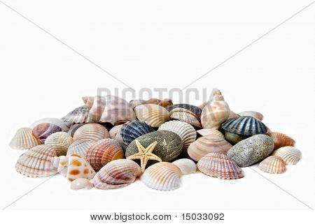 sea shells with stones isolated on white