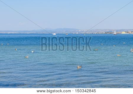 seascape with clear calm mediterranean sea waters with seaguls and yachts, Martigues, Provence, Cote dAzur, France