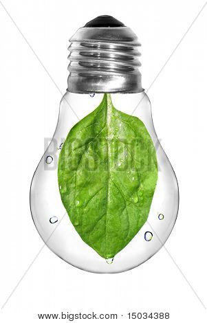 Natural energy concept. Light bulb with green spinach leaf inside isolated on white