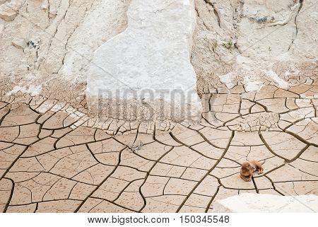 Dachshund dog lying down at a forsaken clay quarry
