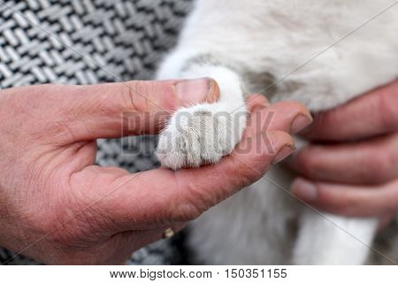 picture of a paw of a cute stray kitten on a hands