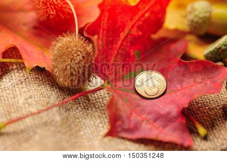 One euro coin on autumn maple leaves