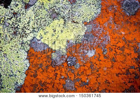 old mould on stone natural background