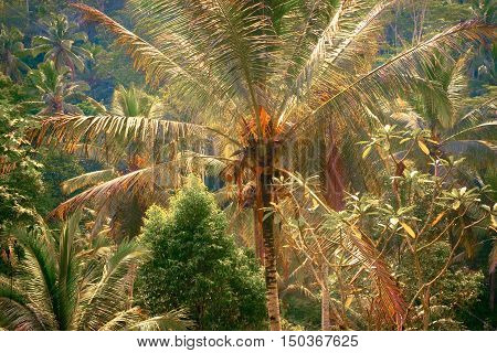 Surreal fantasy colors of tropical nature. Abstract rainforest landscape with jungle plants