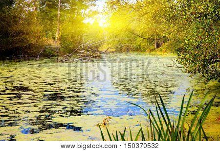 Autumn landscape on old bog