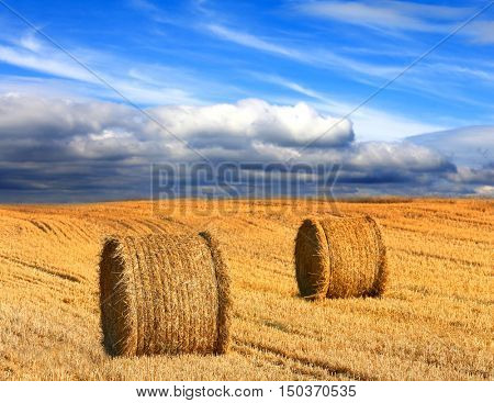 Landscape with hay rolls on farming field under nice clouds in sky