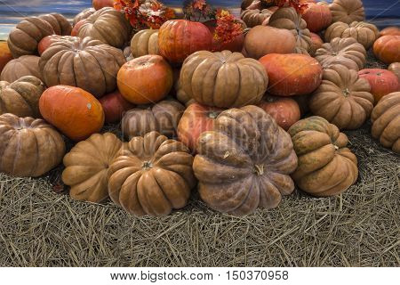 A lot of different size colorful pumpkins stacked pile under a blue sky.